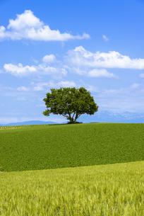 丘の町美瑛の田園風景 FYI00365051