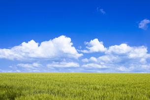 丘の町美瑛の田園風景 FYI00365232