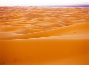 サハラ砂漠 FYI00365916