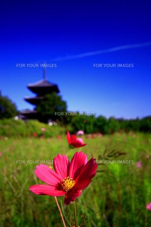 秋の青空 FYI00368090