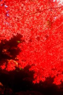 秋、燃ゆる FYI00368111