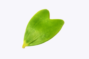 ハートの葉っぱ FYI00368852