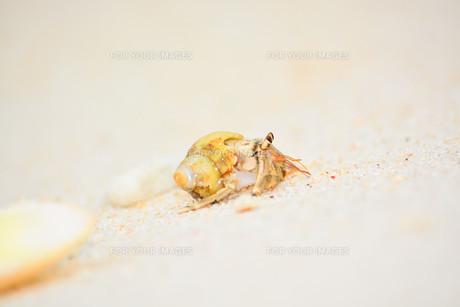 宮古島白い砂浜のヤドカリと貝殻 Fyi00372920 気軽に使える写真