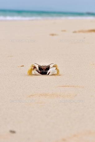 宮古島前浜ビーチ波打ち際の蟹 Fyi00375955 気軽に使える写真