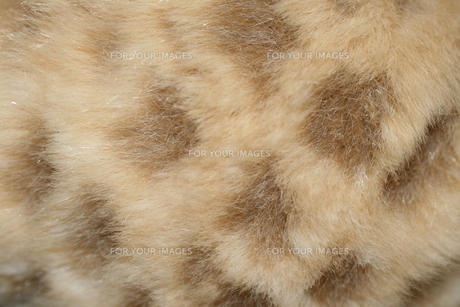 豹柄の毛 FYI00377388