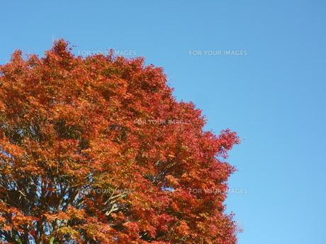 空を焦がす赤 FYI00377436