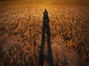 夕日と人影と草 FYI00378942
