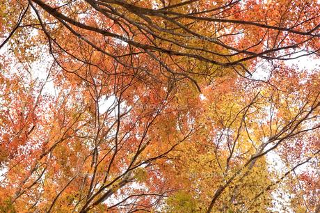 紅葉した木々 FYI00382128
