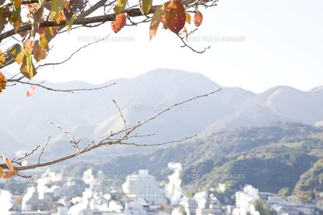 別府温泉の湯煙と紅葉した葉 FYI00382156