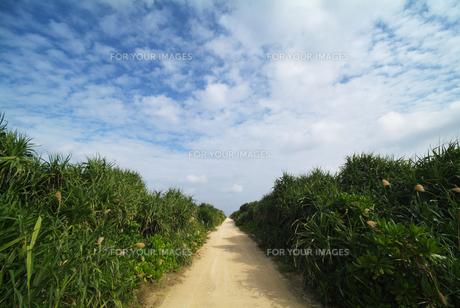 久高島の一本道 FYI00382285