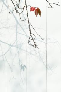 残り5枚の紅葉の葉っぱ FYI00382300