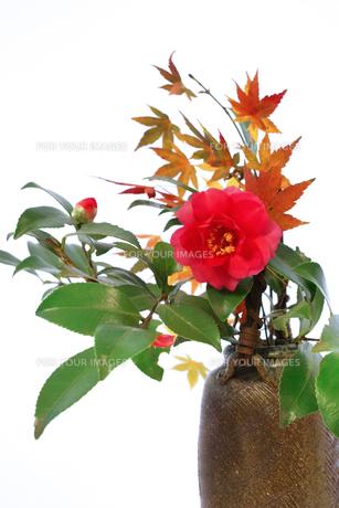 花瓶に生けたツバキとモミジ FYI00382333