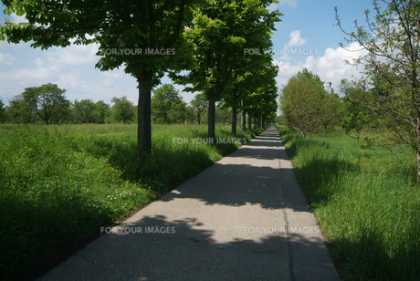 リズミカルな並木の影の落ちた歩道(ヨコ) FYI00382348