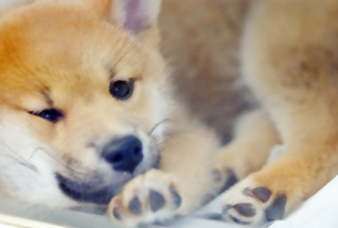 dog FYI00382994