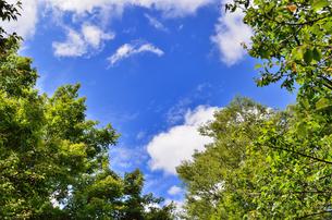 初夏の青空と雲と新緑 FYI00386234
