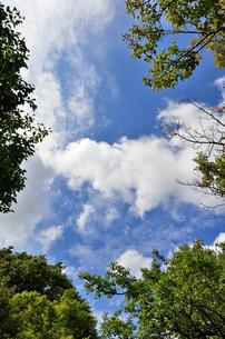 初夏の青空と雲と新緑 FYI00386246