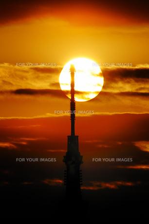夕日とスカイツリー FYI00388722