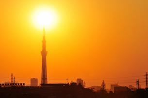 夕日とスカイツリー FYI00388733