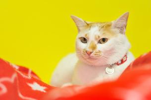 愛猫 FYI00389646