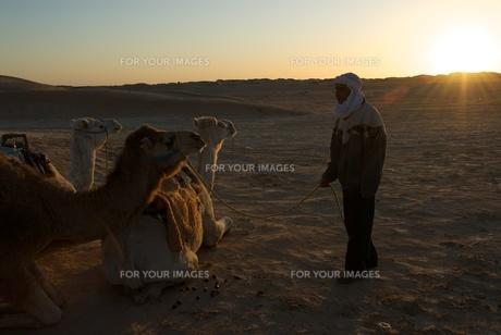 砂漠のラクダ引き FYI00411629