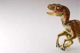 ティラノサウルス FYI00411673