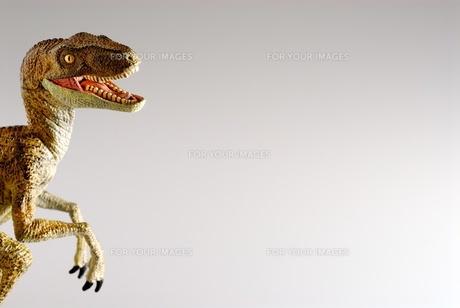 ティラノサウルス FYI00411680