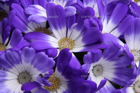花束 FYI00413652