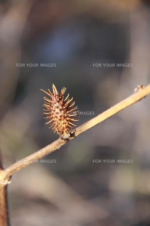 小さい秋見つけた FYI00413751