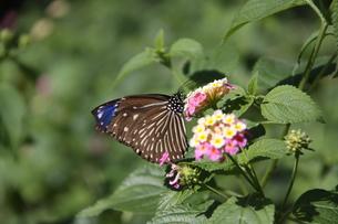 花と蝶 FYI00413760