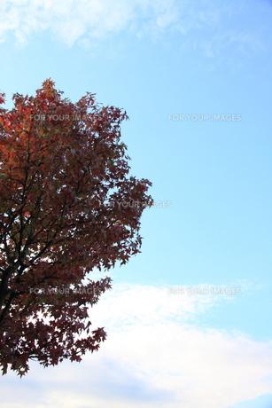 秋の空 FYI00413816