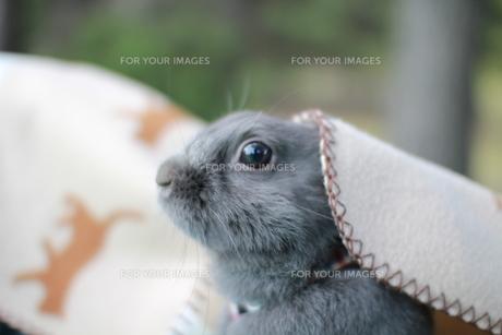 ウサギ FYI00414256