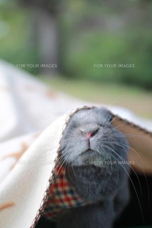 ウサギ FYI00414261