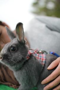 ウサギ FYI00414264