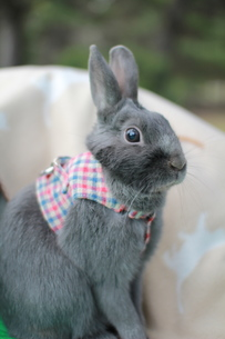 ウサギ FYI00414265