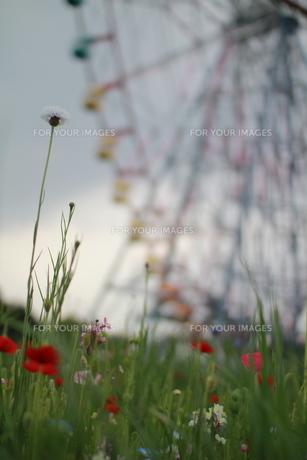 花畑 FYI00414281
