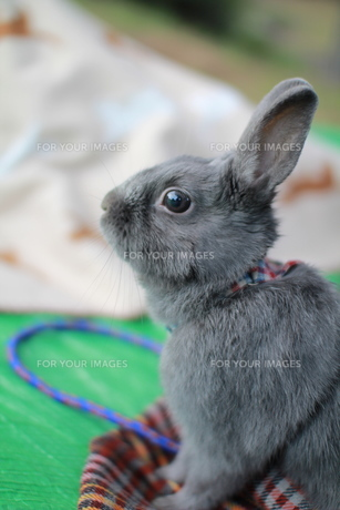 ウサギ FYI00414284