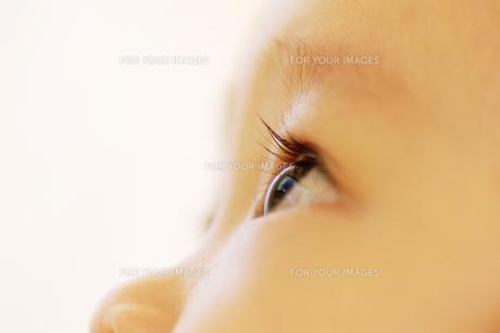 赤ちゃんの瞳 FYI00415412