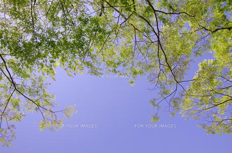 新緑と青空 FYI00415596