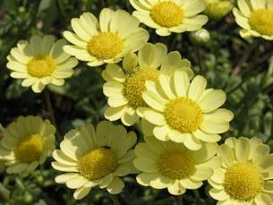 黄色い花 FYI00417189