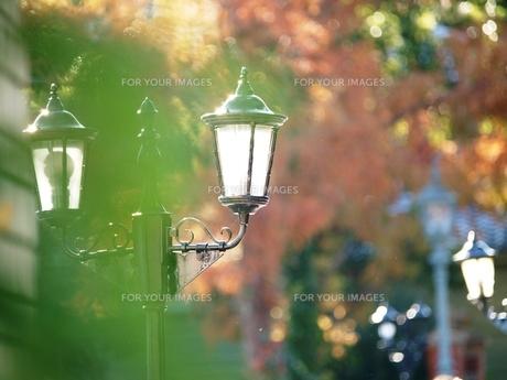 紅葉の街灯 FYI00417256