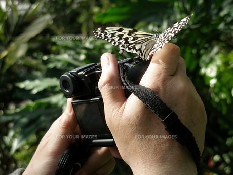 蝶々とカメラ FYI00417444