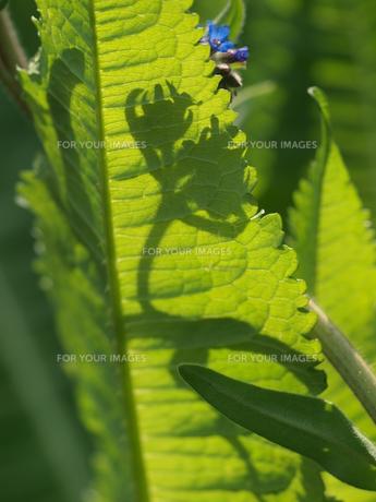光と緑の葉 FYI00417686
