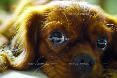こっちを見る犬 FYI00417797