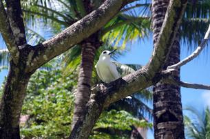 白い鳥 FYI00417931