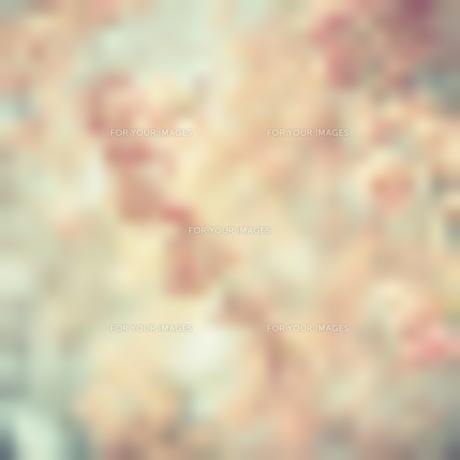 枝垂れ桜 FYI00417953