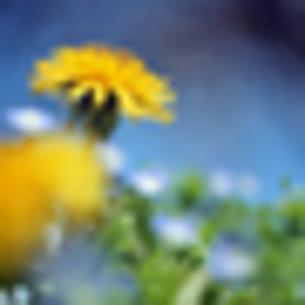 春の生命 FYI00417974