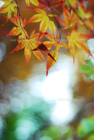 秋のはじまり FYI00417985