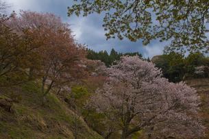 奈良吉野山春景色 FYI00418807