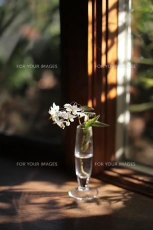 窓際の一輪挿し、ヤマホロシ FYI00418879