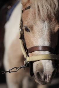 馬、正面から FYI00418896